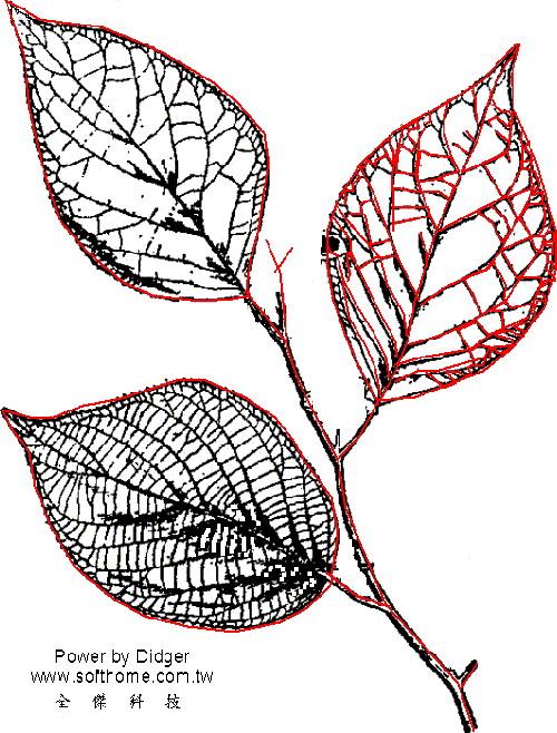 植物數位化