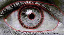 瞳孔數位化