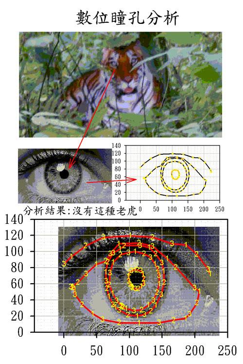 SigmsPlot 數位瞳孔 可只顯示點 線 點加線 填色 顯示座標 高度技巧 Iris